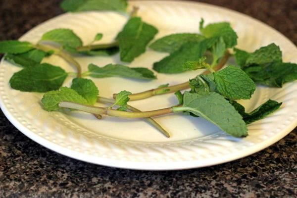 When the only mint you can get looks tired and crumpled, there's a very quick and easy way to revive it. Learn my simple method for making wilting mint look fresh and beautiful for cocktail garnish.