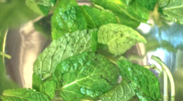 Mint leaves soaking in bowl of water